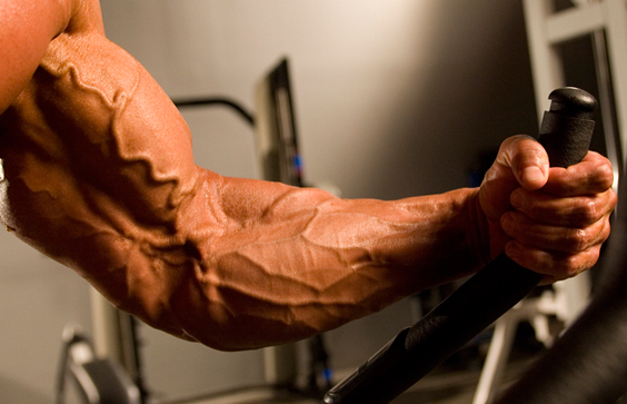 Muscle Size by Priming the Pump: Do You Really Need a Warmup?