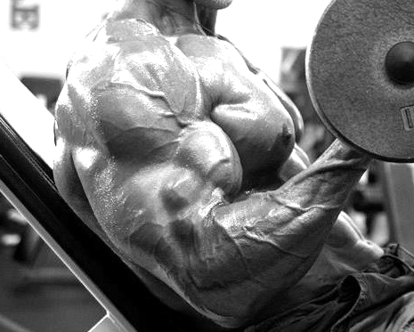 Big biceps, incline curls - Muscle On, Bodyfat Gone